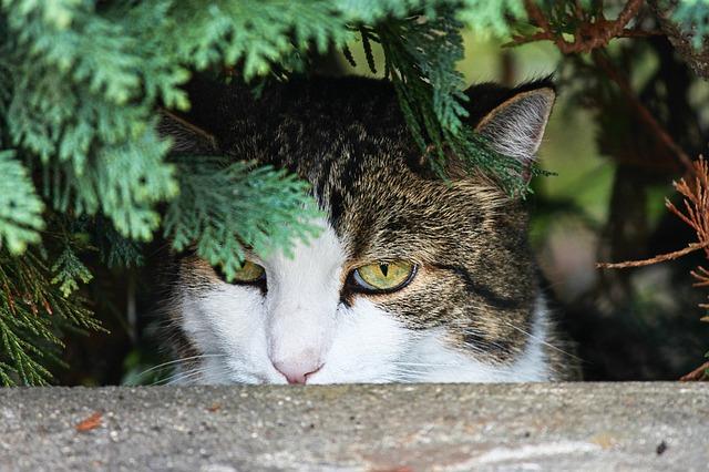 cat-3636032_640