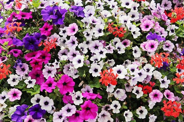 flowers-3659630_640