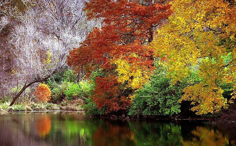 Autumn_Reflection