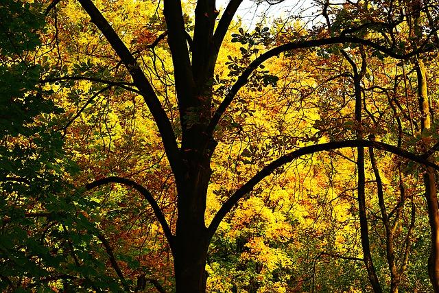 tree-3741856_640.jpg
